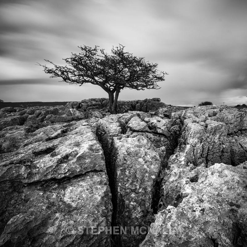 Wild Tree - Landscapes