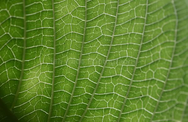Jungle leaf close up, Sri Lanka - Sri Lanka wildlife, people & places