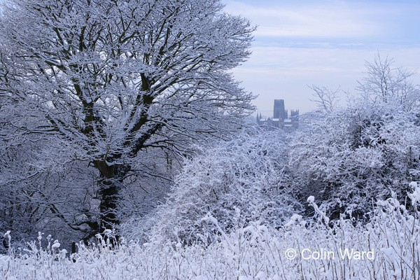 Frost covered Trees at Durham - County Durham