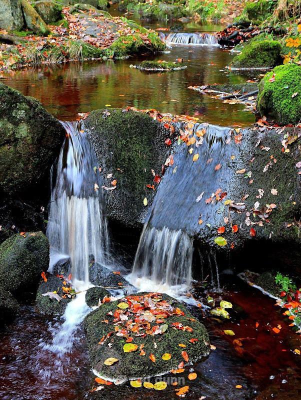 Padley Brook autumn leaves - Peak District