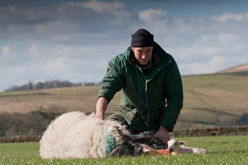 16 - The Lambing