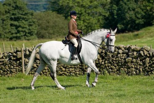 163 - Moniaive Horse Show 2008