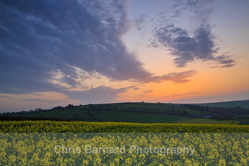 - Rapeseed Fields