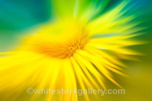 Flower Burst - Up Close !