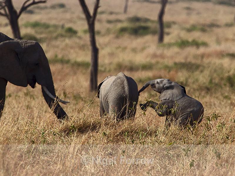 Playful baby Elephant - Elephant