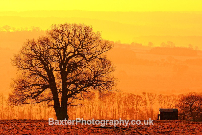 Winter Morning Silhouettes - Views Around Harrogate: