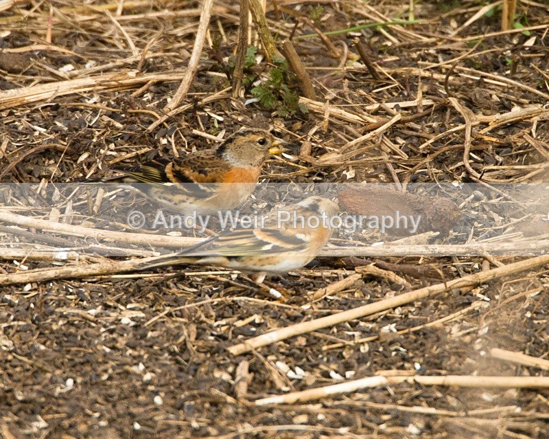 20110319-IMG_2427 - Finches