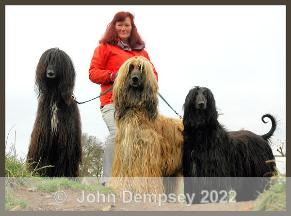 Long Haired and Walking - Walking the Dog