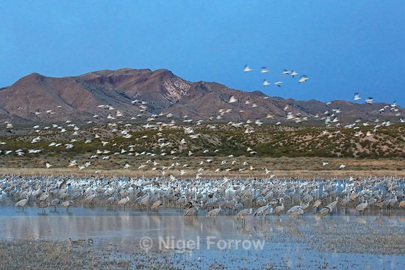 South Crane Pond at dawn, Bosque del Apache, New Mexico - New Mexico, USA