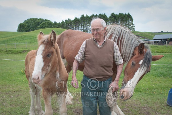 ryecroft-6 - Clydesdales 2013 Include Foals