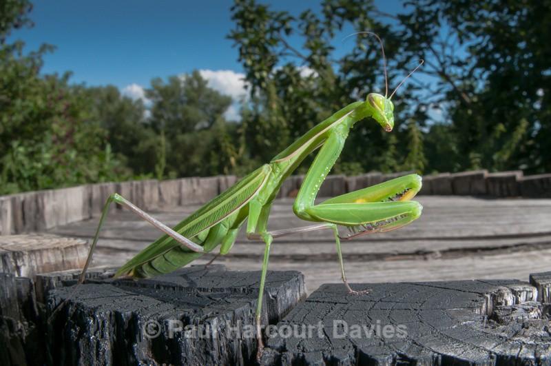 - Bugs: Wide-angle