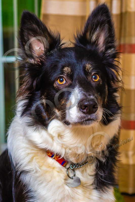 dog-1491 - Pet Photography