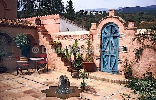 Courtyard garden - Gardens & plants