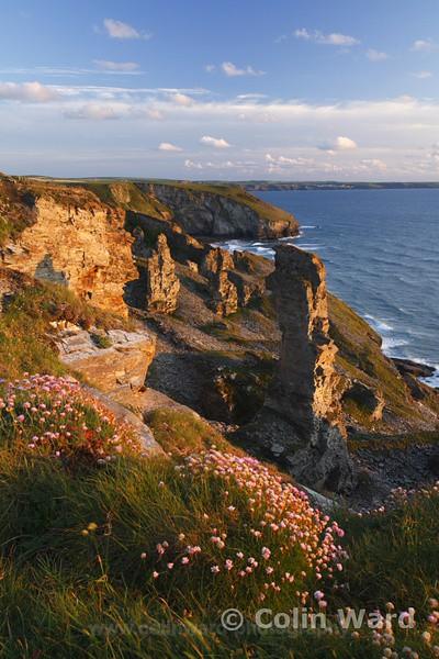 Cliffs at Tintagel lookig towards Trebarwith Strand. Ref 2402 - Cornwall