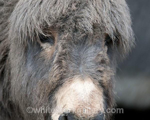 Donkey Face - Wildlife and Animals