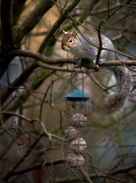 Thief!! - Flora & Fauna...
