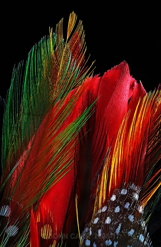 FEATHERS-1-4005 - ABSTRACT DETAIL/CLOSE UP PHOTOS
