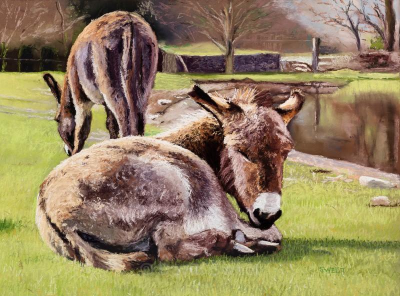 Irish Donkeys - Paintings