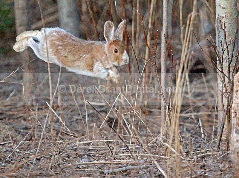 On a Wing and a Hare - Mammals, Reptiles & Amphibians
