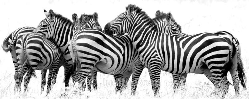 Zebra Group - Tanzania Birds and Mammals
