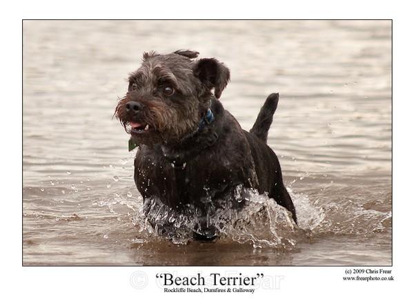 Beach Terrier - Animals/ Wildlife