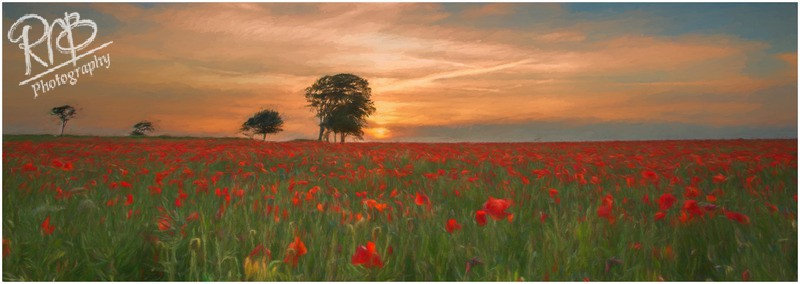 Poppies Painting - Recent Landscape Images