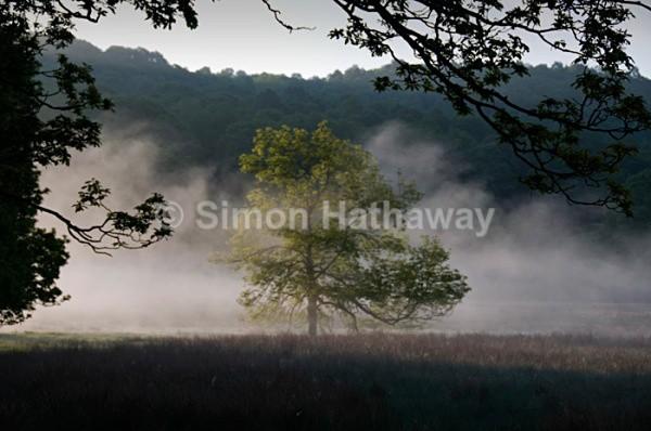 Magic Tree - English Lake District