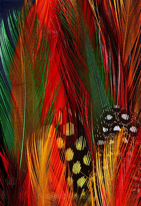 Feathers-3-4058 - ABSTRACT DETAIL/CLOSE UP PHOTOS