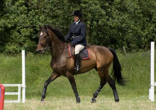 98 - Moniaive Horse Show 2008