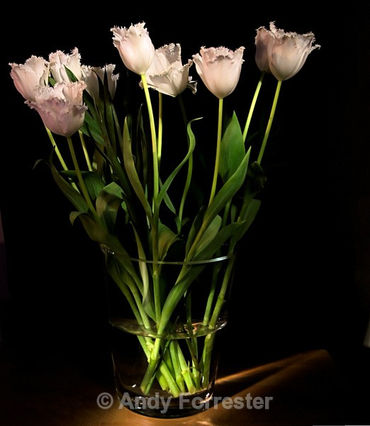 Tulips in the spotlight - Low Light Flowers