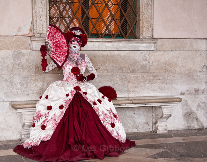 red rose3 - Venice