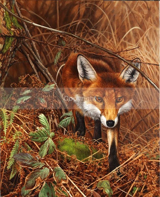 Mischief in mind - Foxes