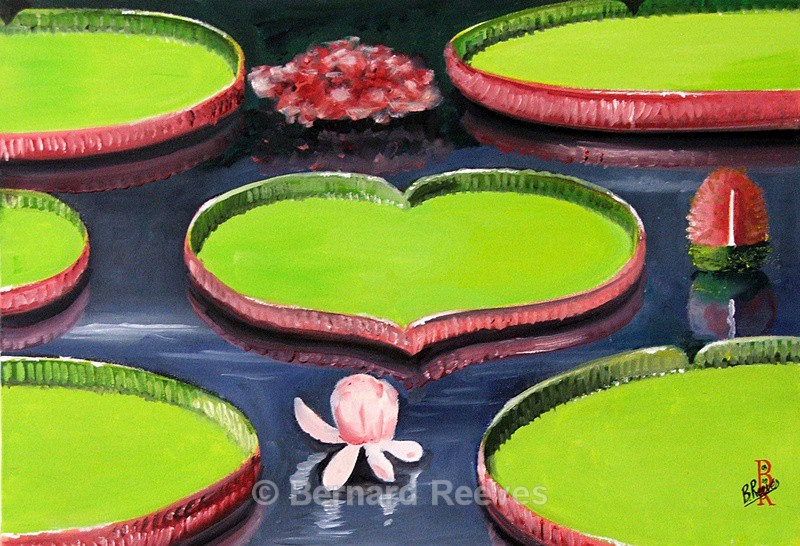 Lilypads and flowers - Miscellaneous