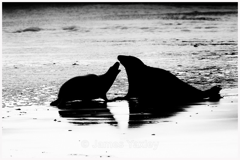 Seal of Disapproval  - Latest Work