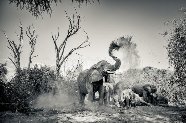 Elephant, Samburu, Kenya