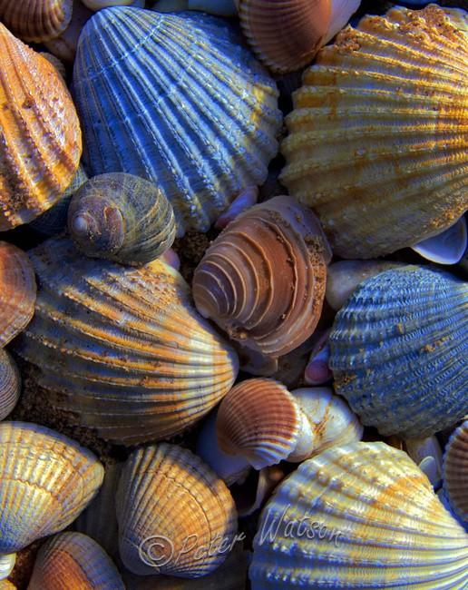 Holden Beach North Carolina USA - A Closer Look