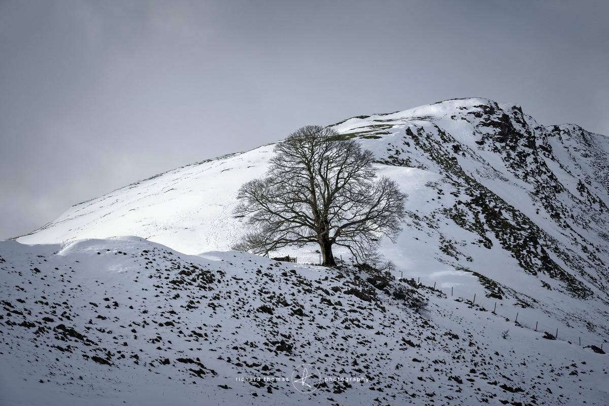 Chrome tree - WINTER