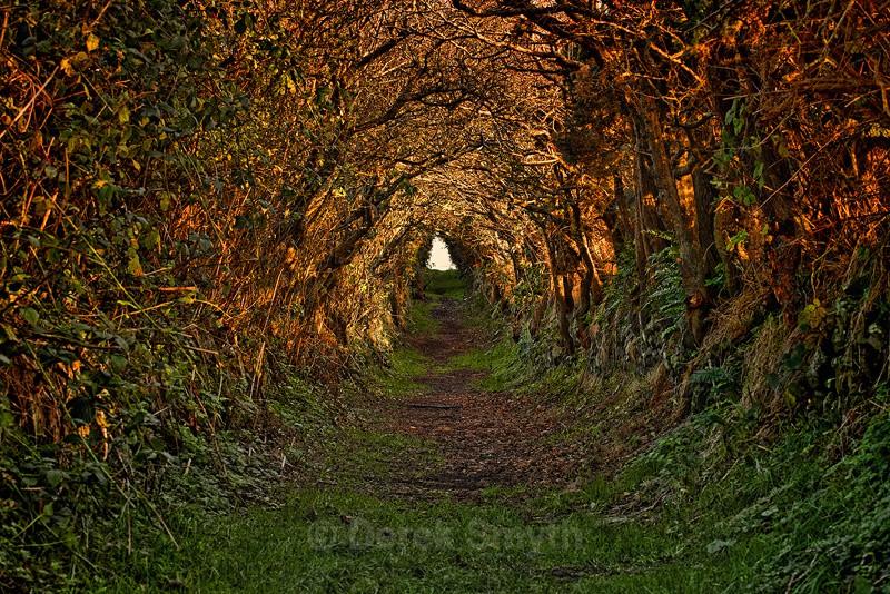 The Old Road - Ballynoe Tree Tunnel Enchanted Path