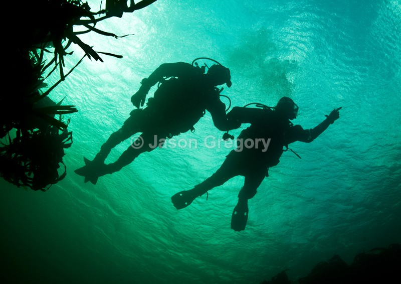 Divers begin a dive - Diver exploring marine environment