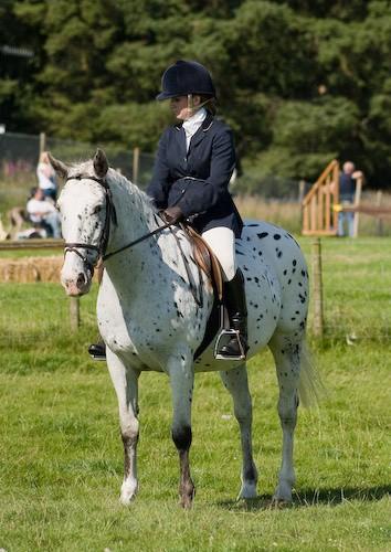 131 - Moniaive Horse Show 2008