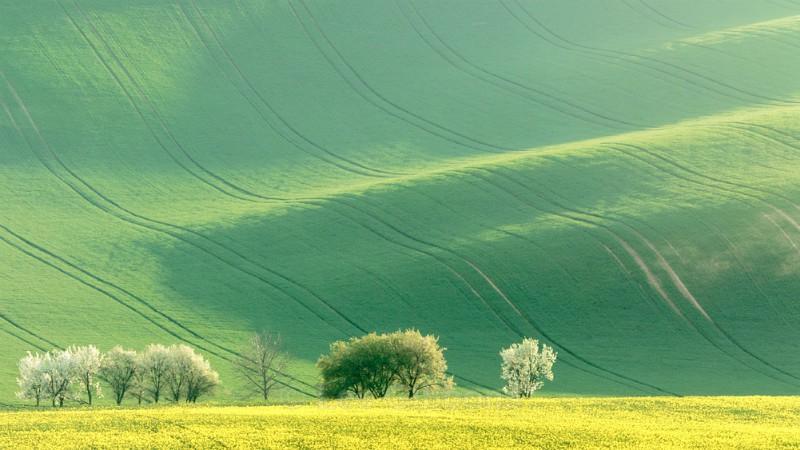 evening blossom - Moravia