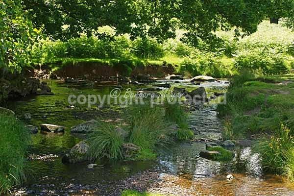River Lin - Bradgate Park - Bradgate Park - Deer & more