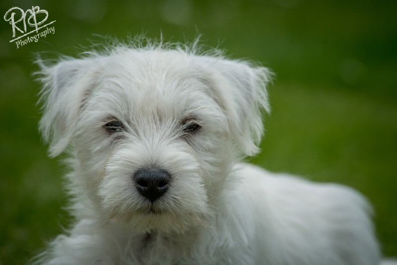 Tasha - Pet Portraits