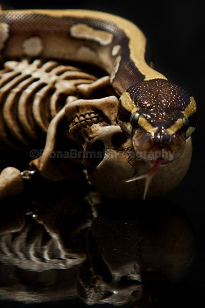 snakies-35 - Reptile Photography