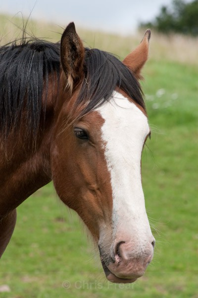 5 - Clydesdales