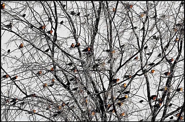 IMG_2128-a-web-1 - Nevada Birds