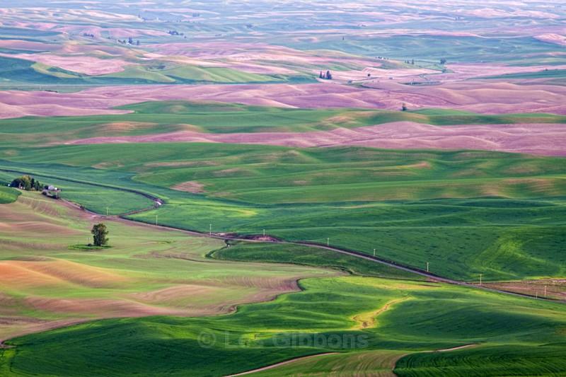 fields 3 - Palouse