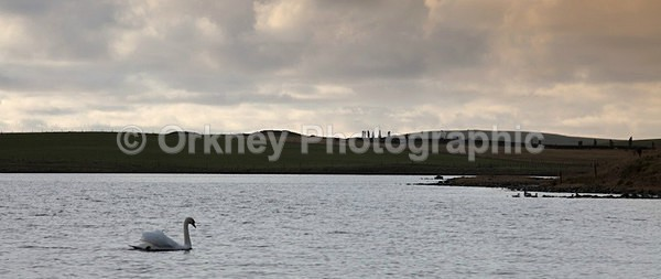IMG_4118-2 - Orkney Images