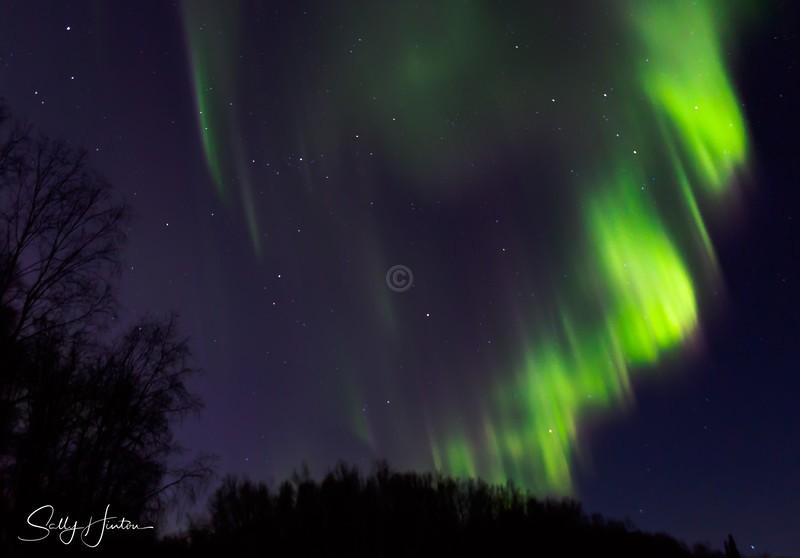 Aurora Fairbanks 10 - The Aurora -Alaska (For Sale)