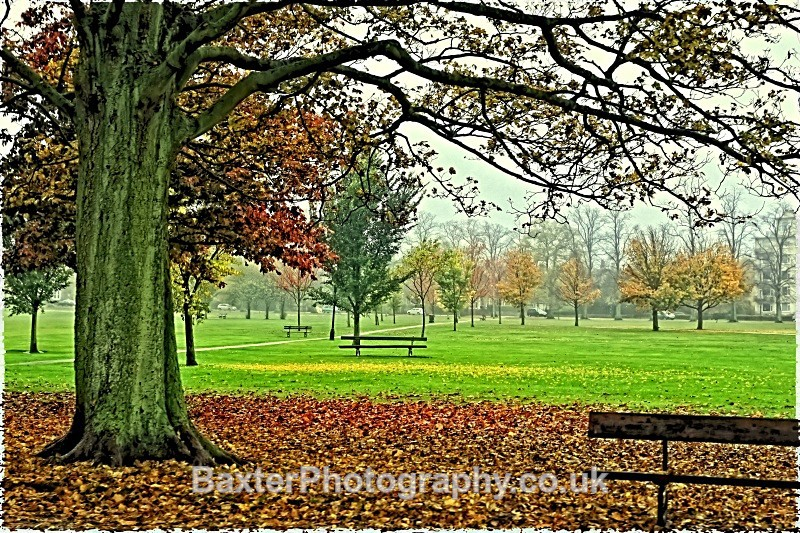 *A best seller. Shades Of Green And Brown - Harrogate Town